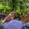 Marmot Shower Rainier website
