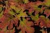 Autumn_20101010_0126