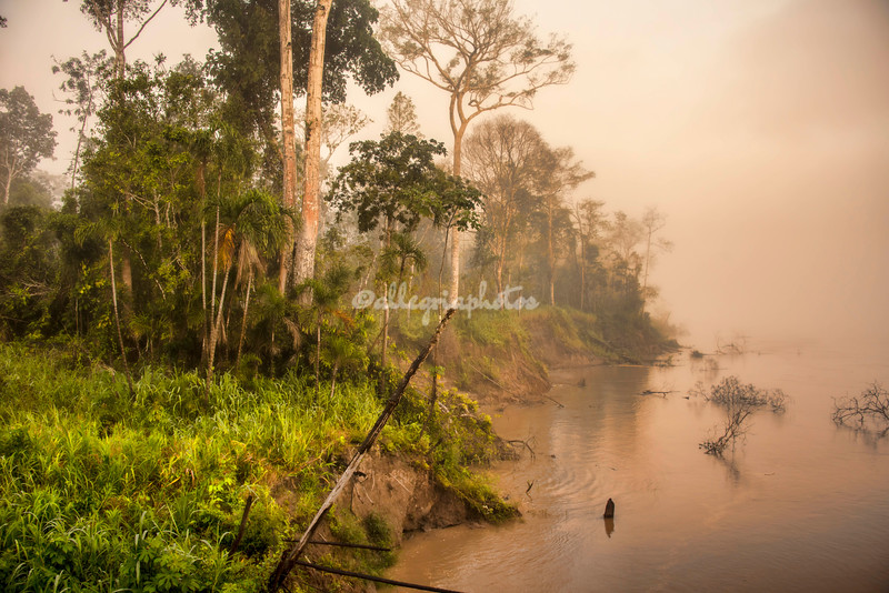 Rainforest in the fog, Upper Amazon, Peru