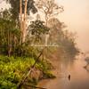 Rainforest in the fog, Upper Amazon, Peru