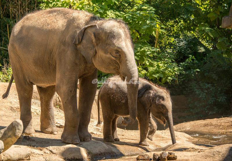 A pair of elephants