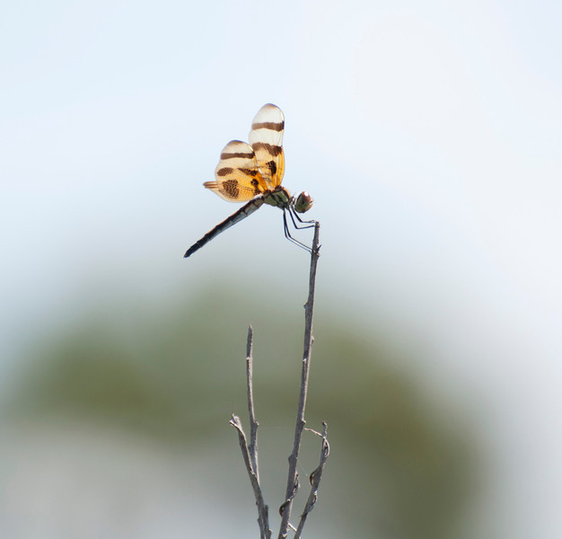 After spending time in the outdoors, your senses tune in and you see everything. Like this little dragonfly.