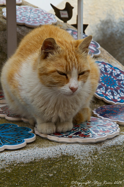 A cat trying to sell us ceramics