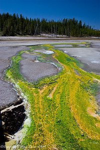 Colorful bacterial mats in hot water flow - Norris Geyser Basin, Yellowstone National Park