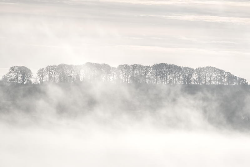 Devon Fog XIV