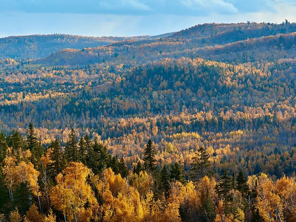 Birch Outcroppings