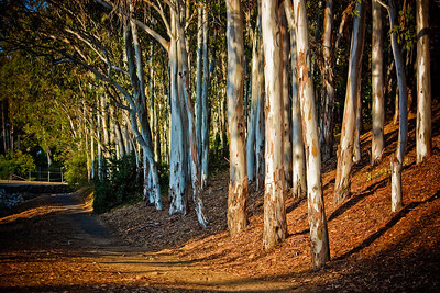 Title: Wooded Path 1st Place photo representing the month of November 2010 in the Lake Forest City Calendar.