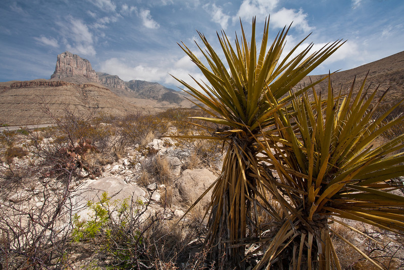 TX-2009-005: Guadalupe Pass, Culberson County, TX, USA