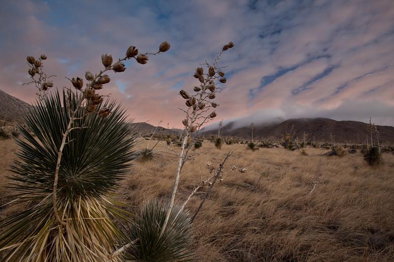 NM-2011-372: Aguirre Springs, Dona Ana County, NM, USA