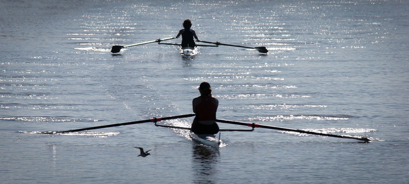 A bird takes flight as two rowers are silhouetted by the morning sun in a regatta on the Petaluma River.