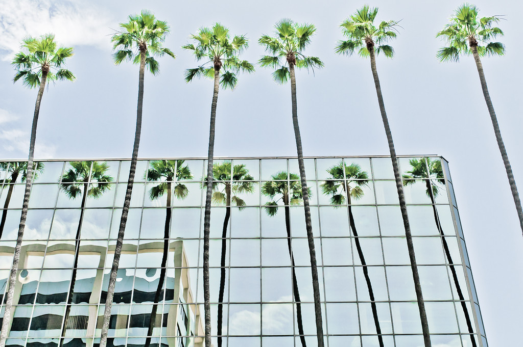 Palms at  Hollywood Blvd