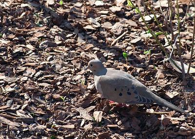 smallbirds_2009
