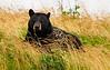 Bob Panick - 2015-08-09-Alaska-BLK10352