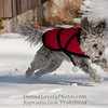 Smokey Lovely the Dog Midair in the Snow