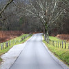 Photo taken in Cades Cove near Gatlinburg, TN