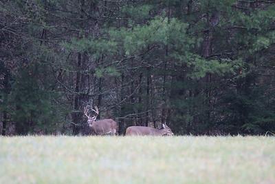 Photo taken in Cades Cove near Gatlinburg, TN