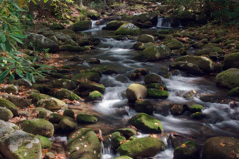 Great Smoky Mountains National Park, Tennessee 0050