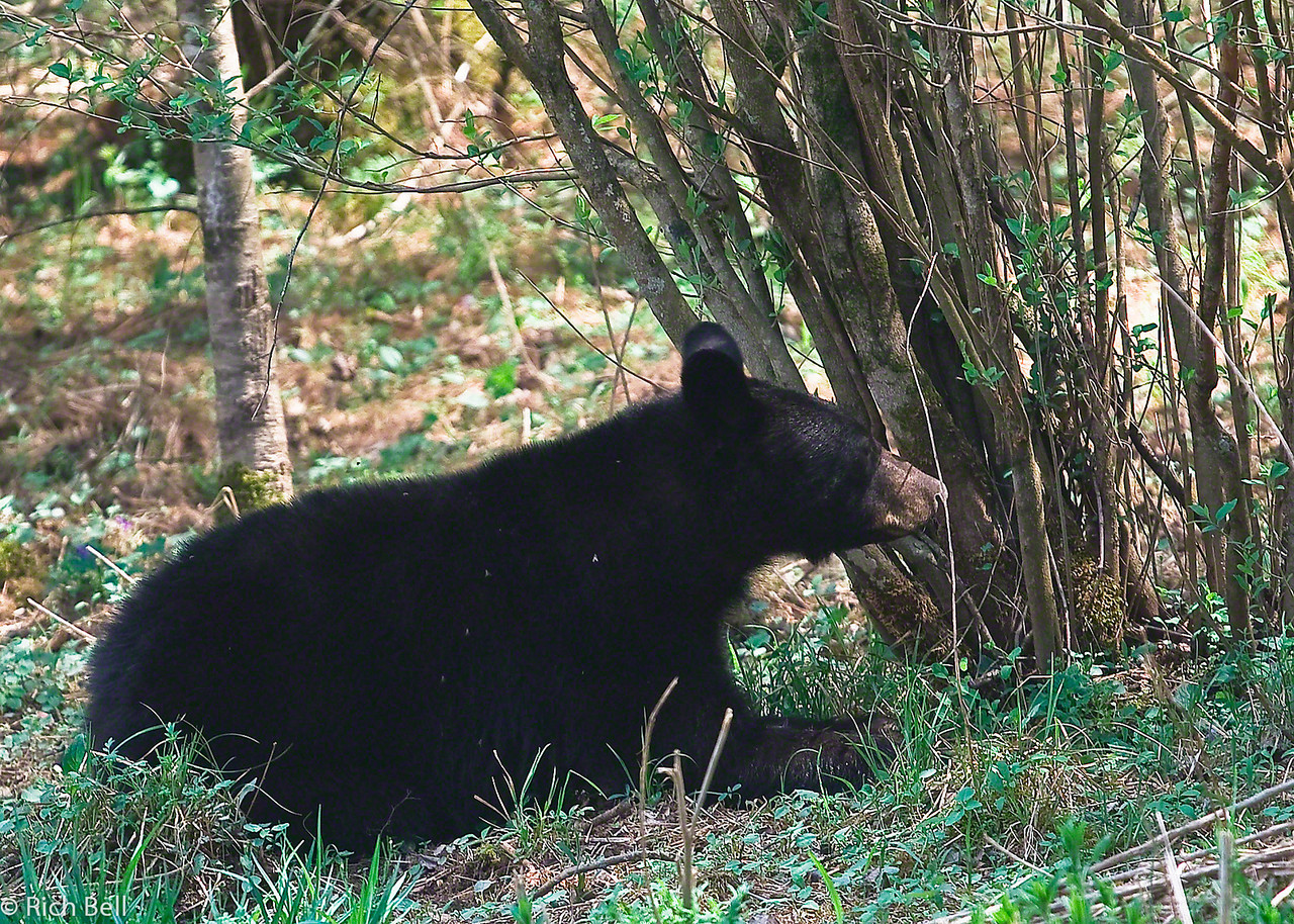 20090425 Smoky Mountains 0079