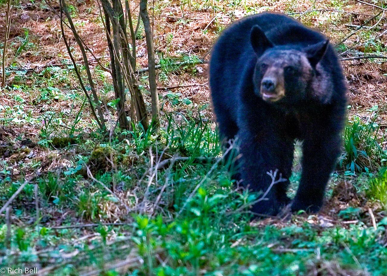 20090425 Smoky Mountains 0087