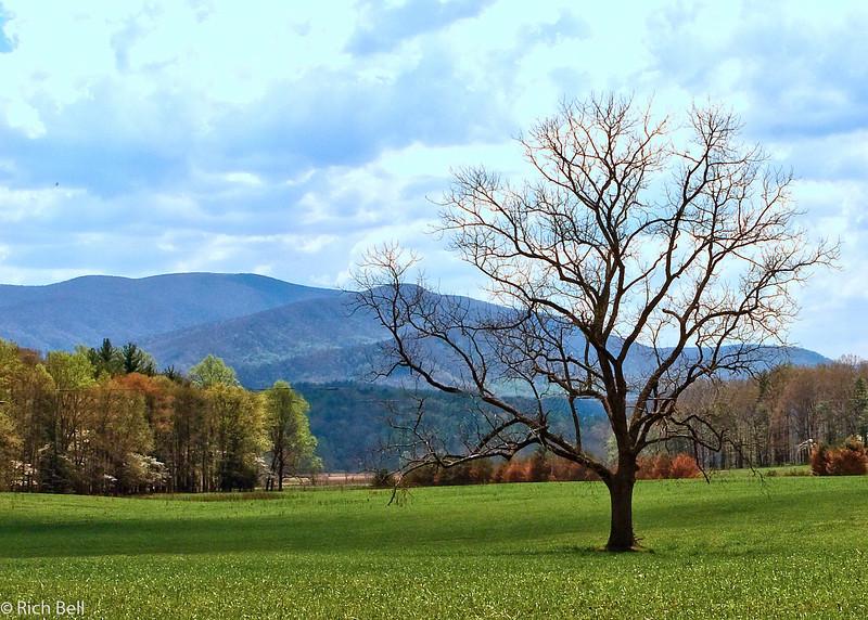 20090425 Smoky Mountains 0071