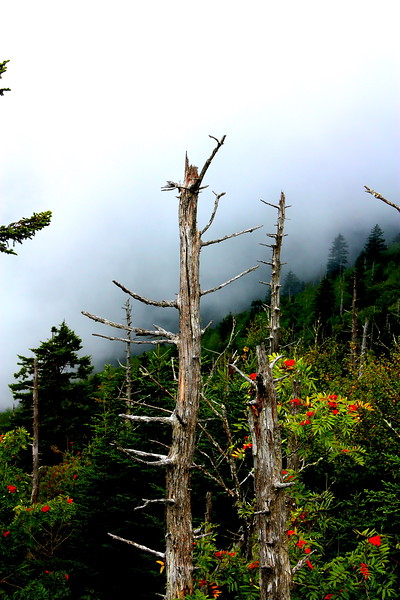 Clingman's Dome  -- click image for larger view