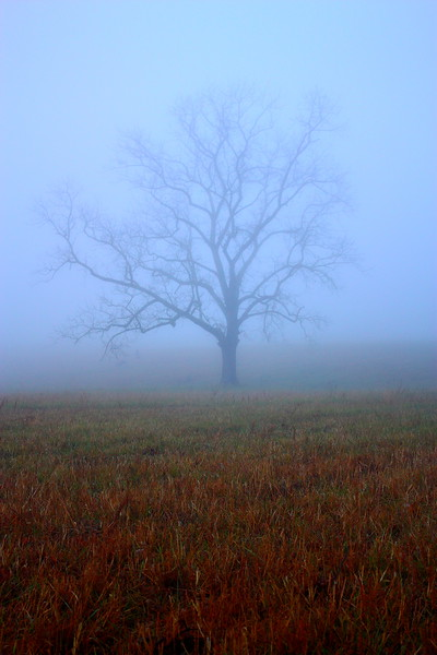 Cade's Cove  -- click image for larger view