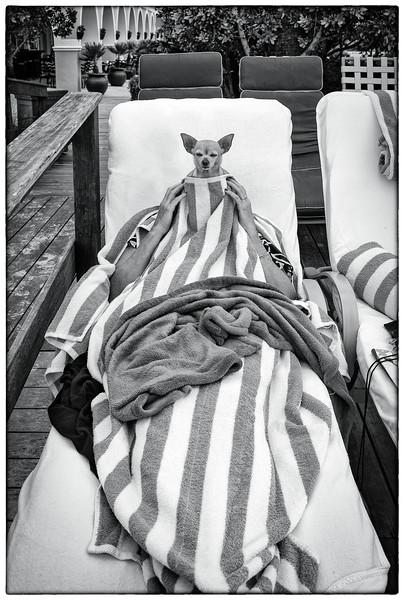 Portrait: Candid Pet