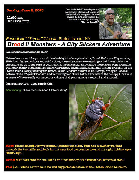 "Sunday, June 2, 2013 11:00 am (for 11:30 ferry)<br /> <br />  Periodical ""17-year"" Cicada, Staten Island, NY<br />  ""Brood II Monsters - A City Slickers Adventure"" <br /> <br />  Can Manhattanites handle this?<br /> <br />  Nature has roused the periodical cicada--Magicicada septendecim, Brood II--from a 17-year sleep. With their fearsome faces and sci-fi voices, these creatures are crawling out of the earth in the billions, right up to the edge of your fear-factor threshold. Experience these noisy bugs firsthand with tour leader, photographer and writer Eric K. Washington. Highlights include crossing on the Staten Island Ferry; visiting the Staten Island Museum exhibit in St. George, ""They're Baaack! Return of the 17-year Cicadas""; and venturing into Clove Lakes Park where the canopy lurks with as many of these eerily obstreperous critters that your camera can point and shoot at.<br /> <br />  Come on now...yes!...you can do this!<br /> <br />  Don't worry: these monsters don't bite or sting!<br /> <br />  Meet: Staten Island Ferry Terminal (Manhattan side). Take the escalator up, pass through the turnstile, and look for me near food concession toward the right holding up a cicada sign.<br /> <br />  Bring: MTA fare card for bus; lunch or lunch money; trekking shoes; nerves of steel.<br /> <br />  Fee: $20 - which covers tour fee and suggested donation to the Staten Island Museum.<br /> <br />  Tour leader: Eric K. Washington is a former Staten Islander and veteran of the 1962 cicada emergence. He also covered the 1996 emergence in the The New Yorker magazine story, ""They're Baaack!."""