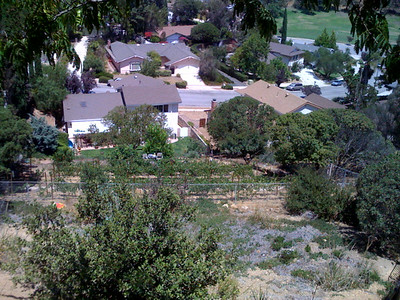 My parent's neighbors have a vineyard now