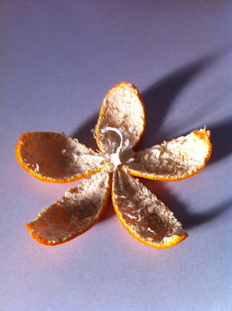 Is this a picture of a flower?  No it is an orange peel. I thought it looked like a flower.