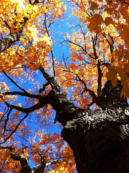 Isn't fall color the best?