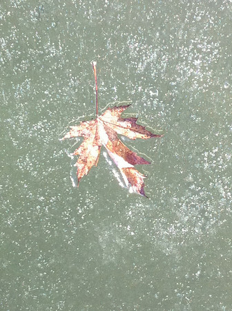 We went to Honeysuckle Beach and Hayden Lake was frozen. This leaf was frozen in the lake. Feb 2011