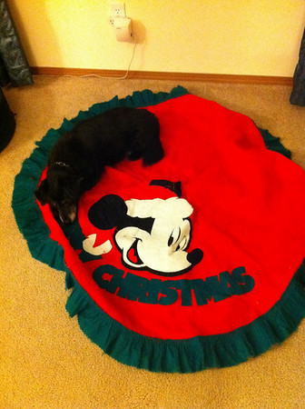 I was getting out the Christmas decorations. Mitch was thinking I got out the tree skirt for him to take a nap on.  He was all tuckered out after a busy Thanksgiving day with the family.  Nov 2010