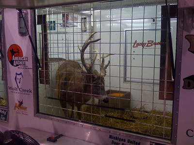 Buck at the hunting time expo