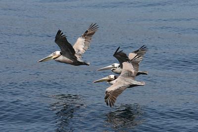 Flight of three