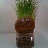 Taken on my iPhone...homemade chia pet. One of my kids made it.