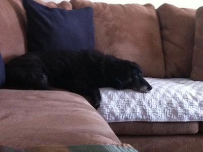 Mitch taking a nap  Dec 2010