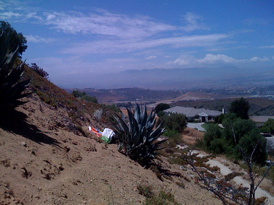 Sad beach ball. It rolled down the hill and died on the cactus. It's been there for over a month right behind my parents house.