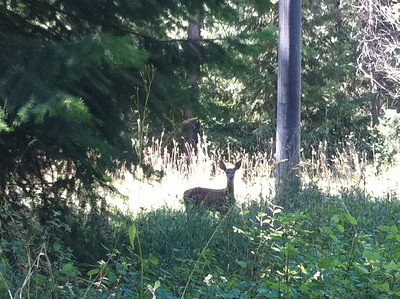 We take Mitch for walks at McCall Park all the time. We see deer there quite often. I was able to get a piture of this one with my camera. Aug 2010