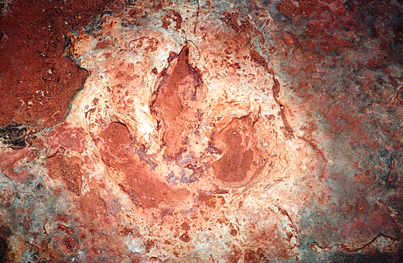 DINOSAUR FOOTPRINT PAINTED DESERT UTAH 1994