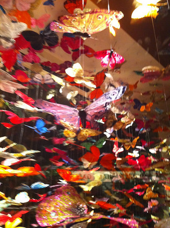 Butterflies in a window at the Coeur d' Alene Plaza shops.