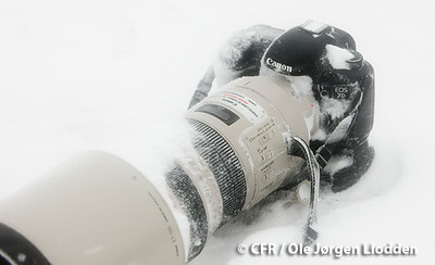 This is my camera ( with a lens I wish I had!) from http://canonfieldreviews.com/7d-1-weather-sealing/  copyright of image: Ole Jorgen Liodden (Canon 7D in a snow blizzard on South Georgia Island, November 11 2009)