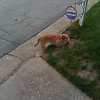 Dog walk in the am