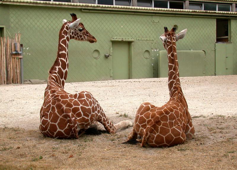 Trip to Rotterdam: Blijdorp Zoo.