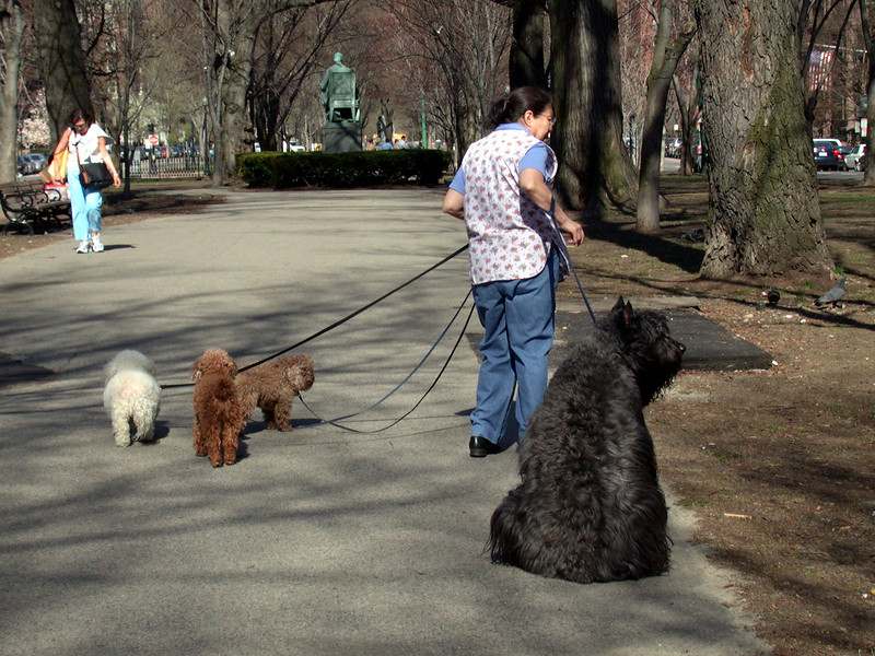 Being in the pet-walking business!