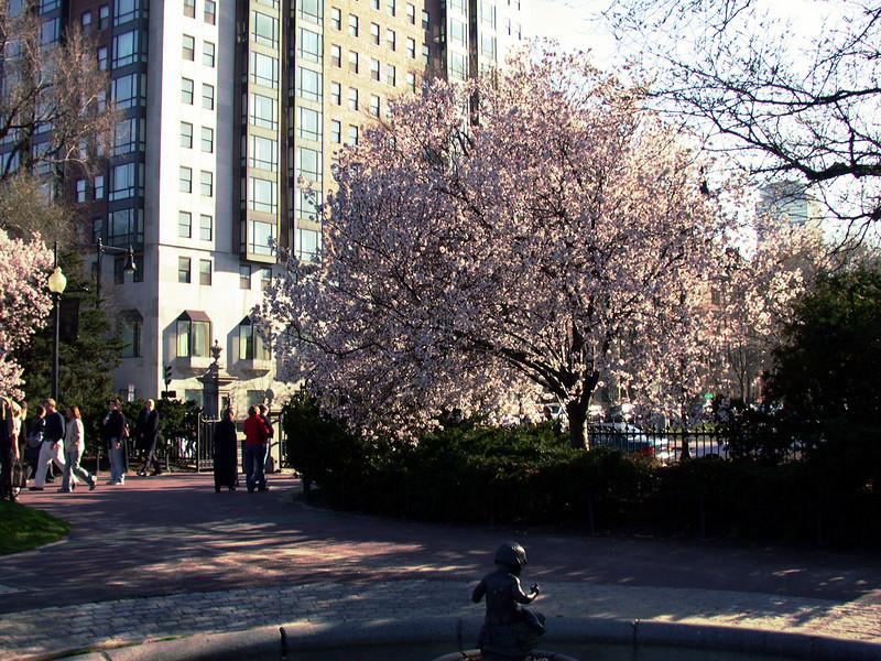 Public Garden (1)
