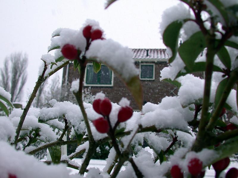 Just some wintery scene (2).