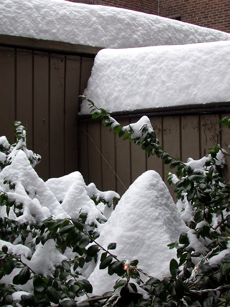Tuesday, after the storm. My Patio (1)