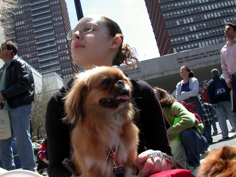Girl with Dogs (2).