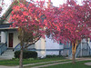 our house with flowering trees